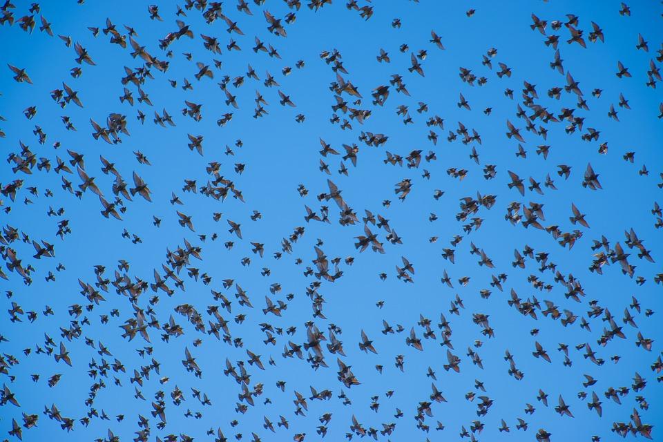 鳥, 空気, 空, ブルー, 自然, 国, オーバーハング, ヘ, 小鳥, ダブ, 眺望, 茶色, グレー