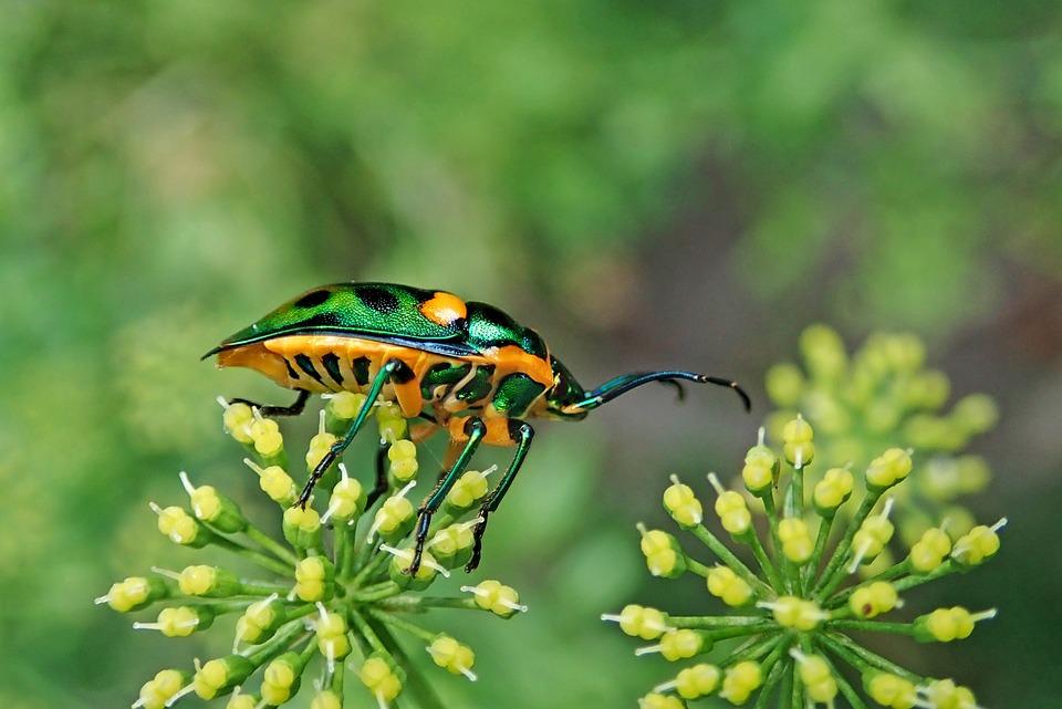 Insectos-mayor-cantidad-de-animales