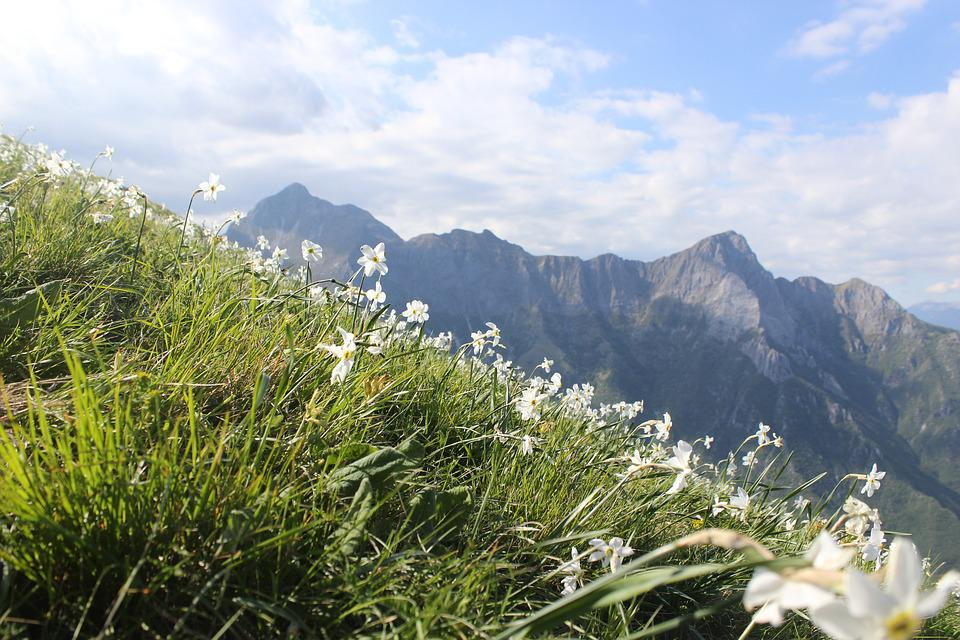 Mountains, Flowers, Panorama, Landscape, Sky, Nature
