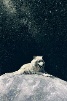 Wolf, Dog, Moon, Phone Wallpaper