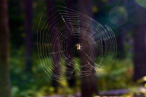 繧ッ繝「, Web, 閾ェ辟カ, 譏・勠, 豌怜袖謔ェ縺�, 繝医Λ繝・・, 蜍慕黄, 豌キ豐ウ, 蝗ス螳カ