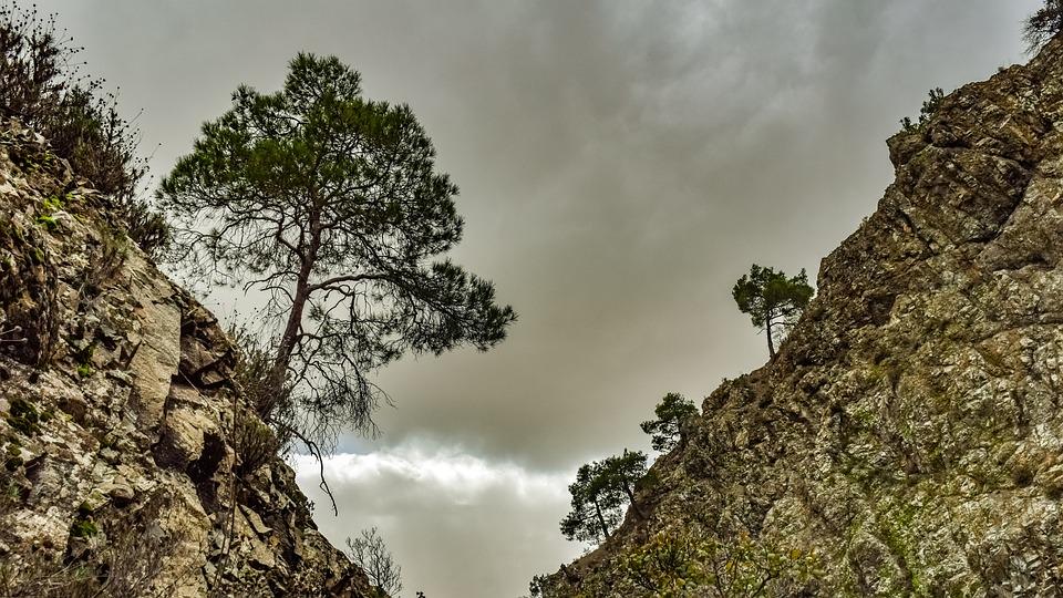 Trees, Mountain, Gorge, Cliffs, Nature, Wilderness