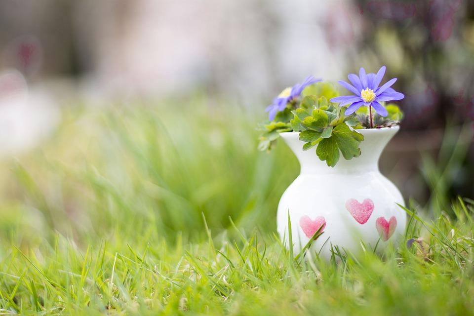 Bloemen In Pot.Bloemen Gras Pot Gratis Foto Op Pixabay
