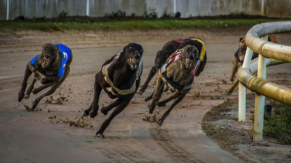 Gaming Companies Helping Greyhound Racing Fund
