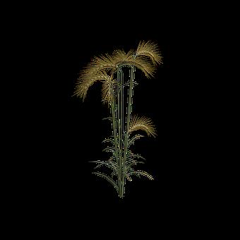 Buğday Resimler ücretsiz Resimleri Indir Pixabay