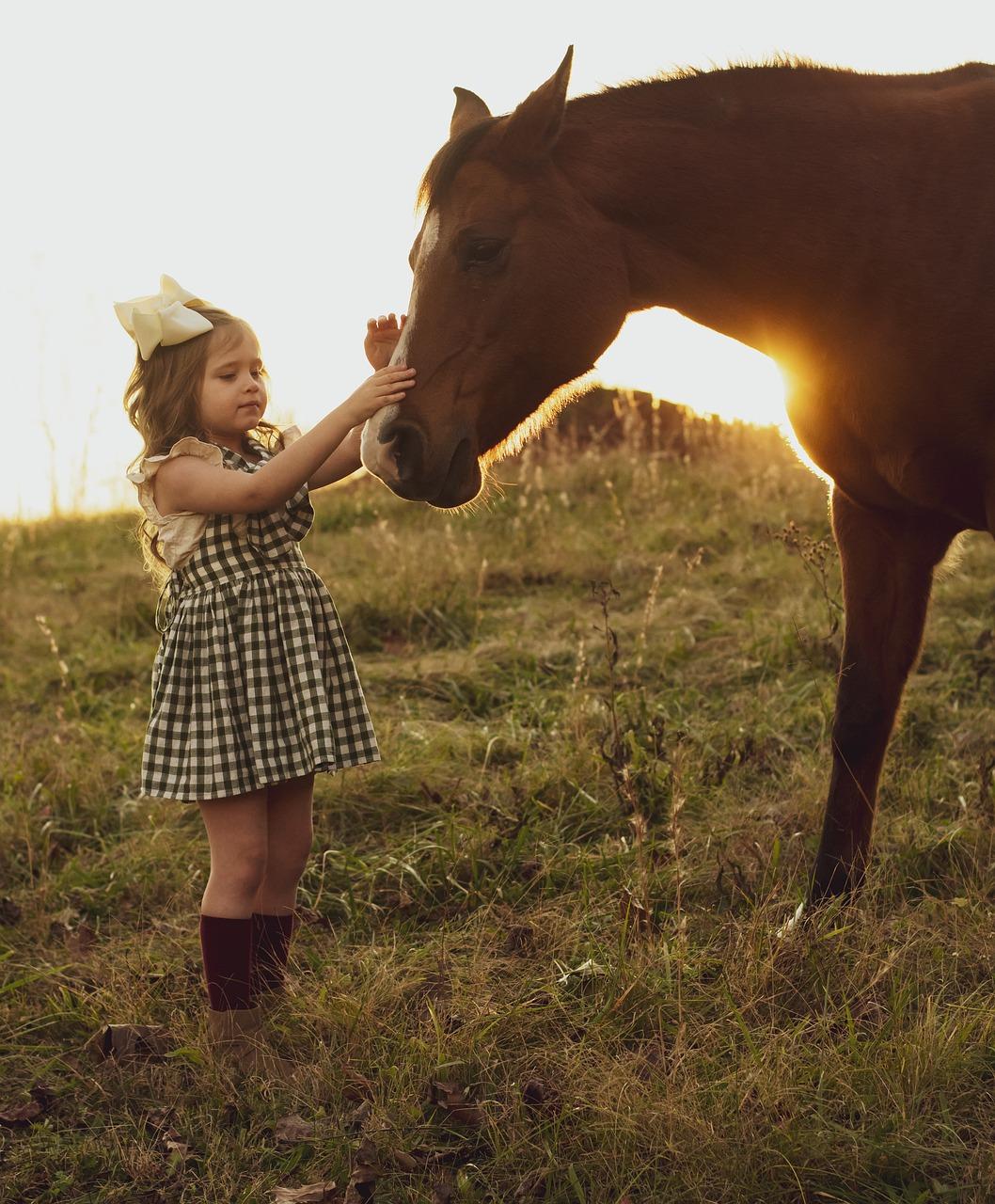 Horse Sunset Girl - Free photo on Pixabay