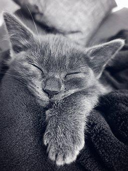 Cat, Kitten, Sleeping, Pet, Feline
