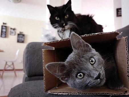 Kucing, Anak Kucing, Licik, Menyenangkan