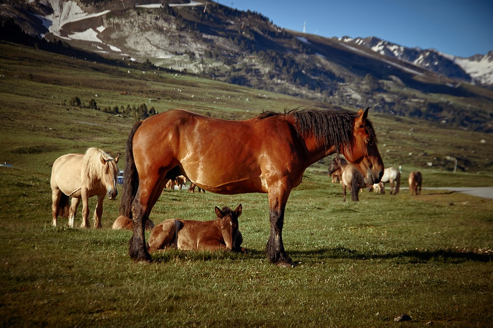 Animal Horses Mountain Free Photo On Pixabay