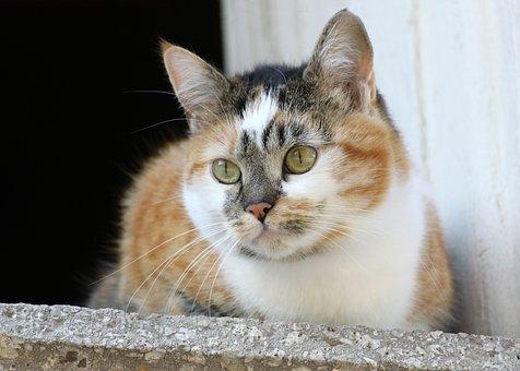 Čierna šuká biela mačička