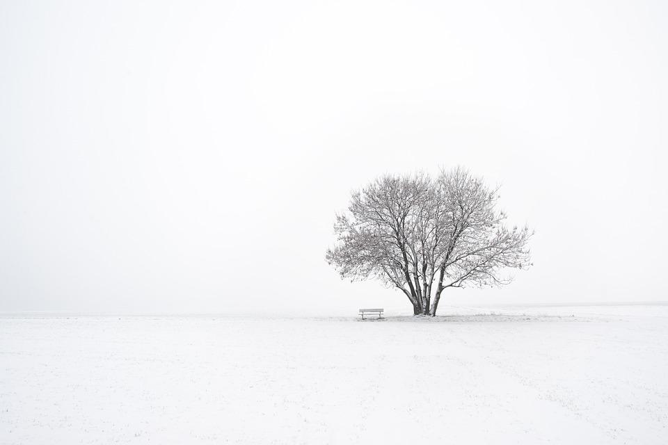 Vinter, Træ, Sne, Natur, Landskab, Kold, Vinterlandskab
