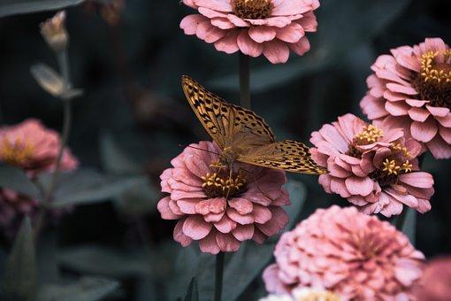 Flowers, Garden, Bloom, Butterfly