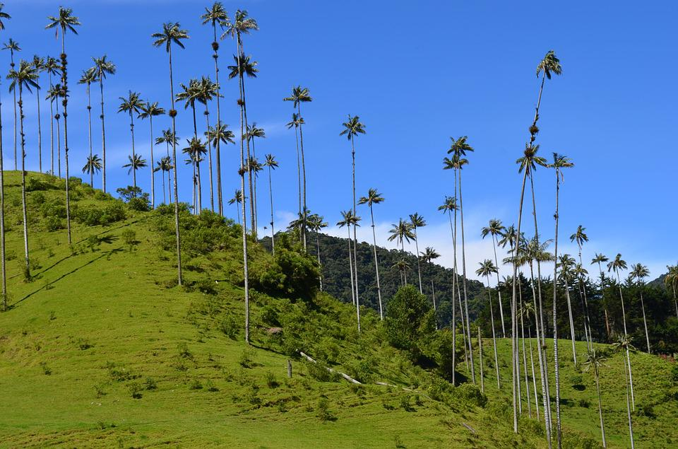 Quindio, Naturaleza, Paisajes, Colombia, Árboles