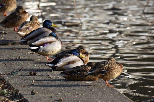 Animal, Lake, Waterside, Bird, Waterfowl