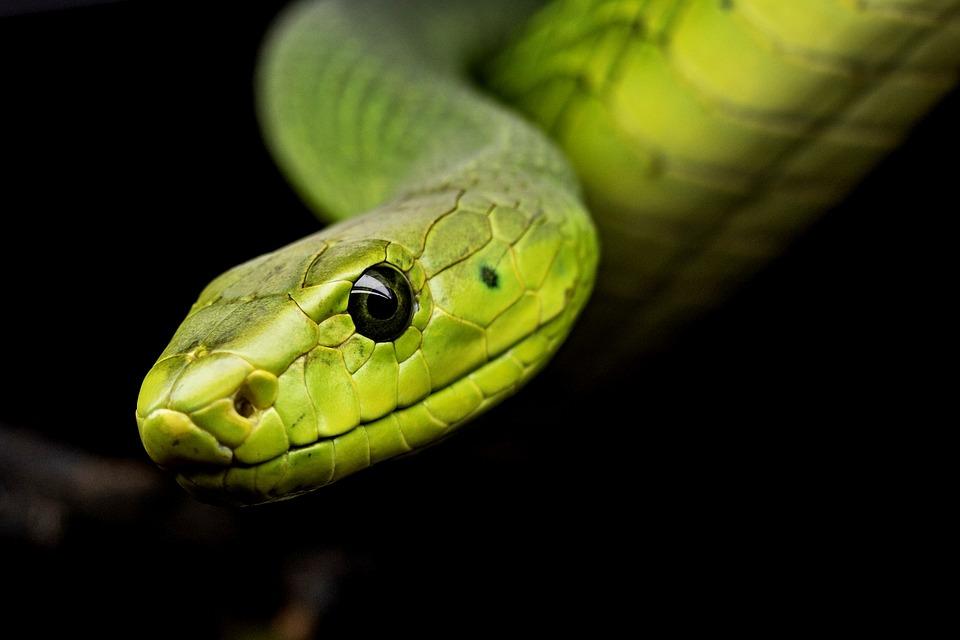Snake, Reptile, Tree Snake, Animal World, Terrarium