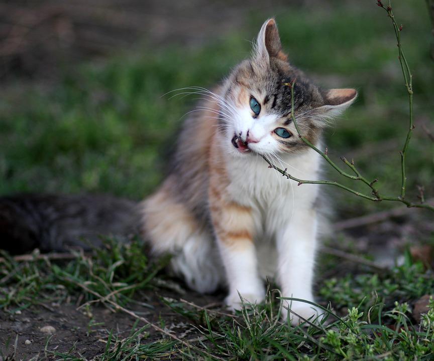 Kucing Mewarnai Hewan Peliharaan Foto Gratis Di Pixabay