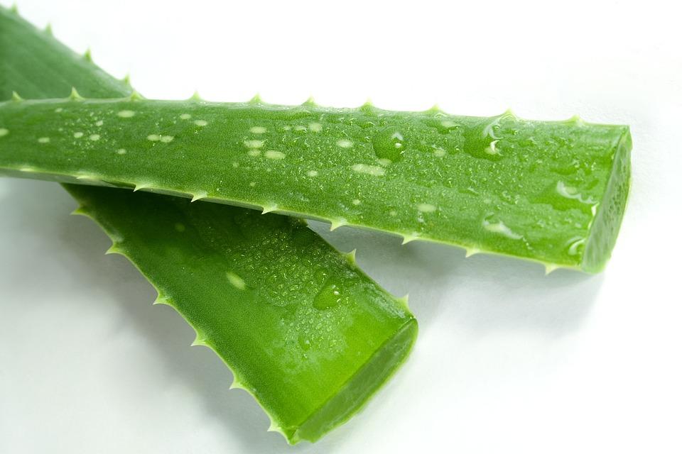 Aloe, Spa, Verde, Cosmetici, Cosmetologia, Foglio