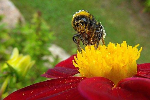 Lebah, Bunga, Taman, Nektar, Alam