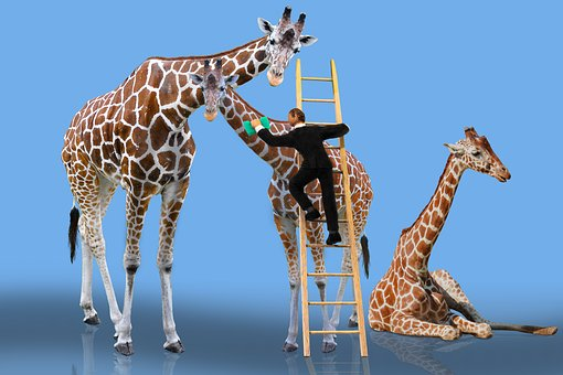Animals, Giraffe, Care, Cleaning, Head