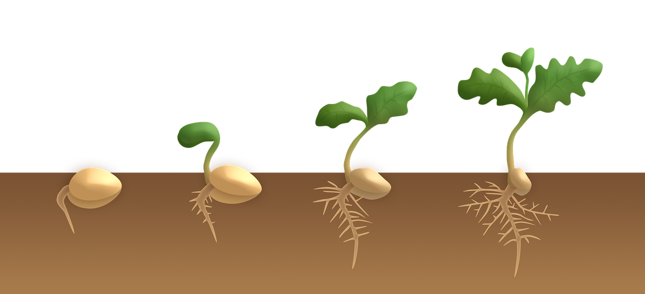 Example of dicot plant