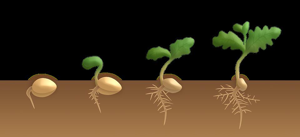 картинка как развивается растение из семени сезоны