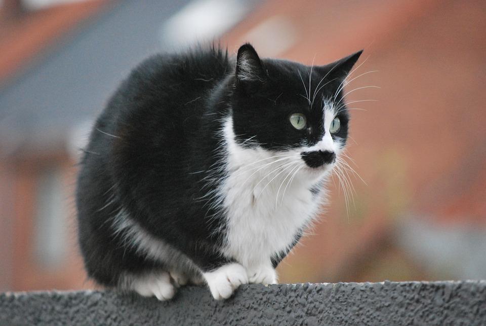 1c26707df9b1 Ζώο Γατάκι Γάτα Κατοικίδιο - Δωρεάν φωτογραφία στο Pixabay