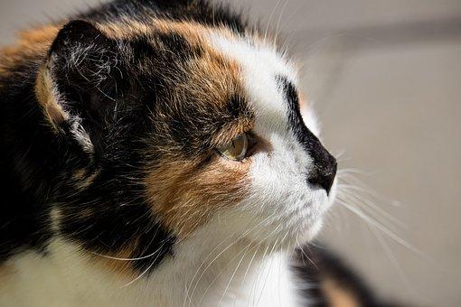Mladý tuk mačička pic