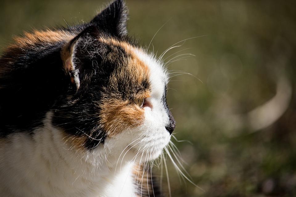 Divoké mačička vids