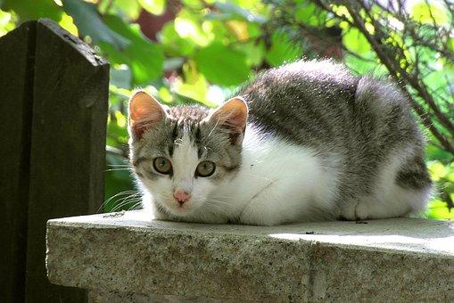 Kucing, Mamalia, Hewan, Dachowiec, Duduk