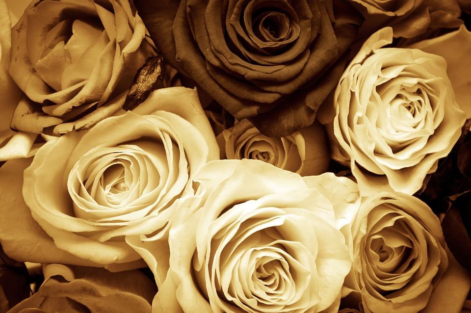 バラ, 花, 愛, ワイン, セピア, バレンタイン·デー, 母の日, 小説, ロマンチック, 愛好家