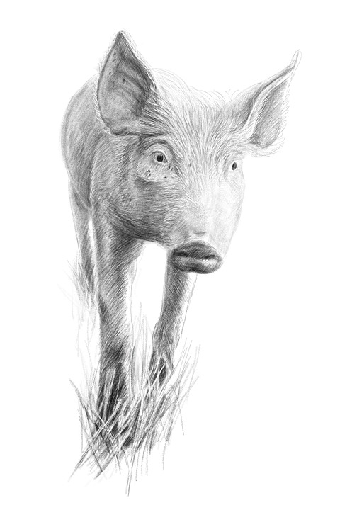 Creion Desen Arta Opera De Imagine Gratuită Pe Pixabay