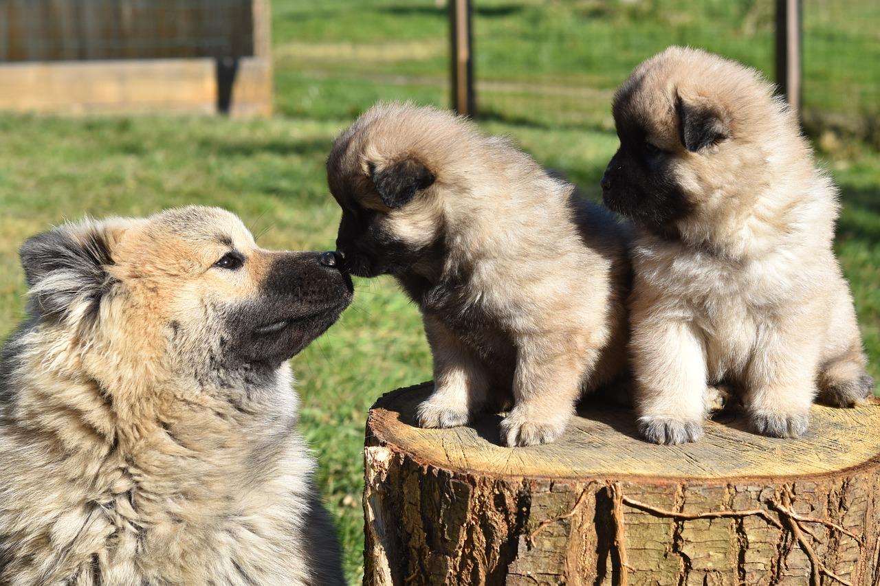 Dog Dogs Puppies - Free photo on Pixabay