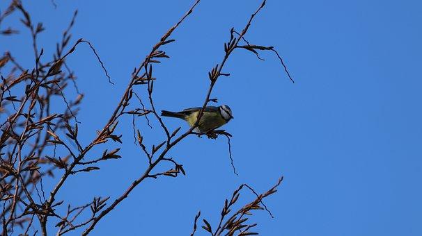 Μεγάλο πουλί μεγάλη γκόμενα