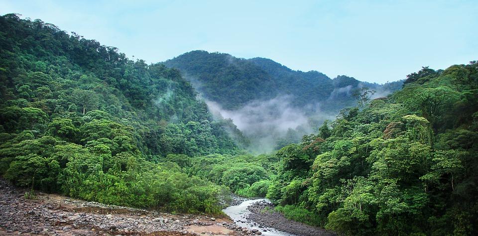 Džungle, Mlha, Stromy, Zelená, Deštný Prales, Tropické