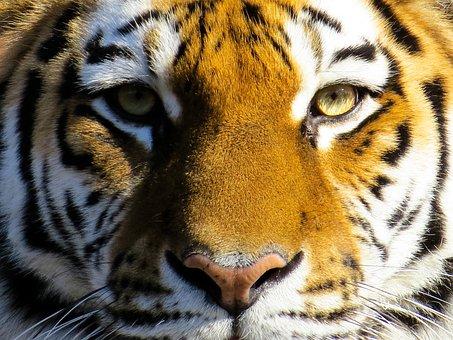 Download 72 Wallpaper Bergerak Binatang Gratis