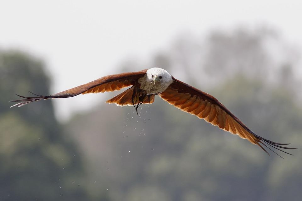 Aves, Ave, Naturaleza, Animales, Plumaje, Fauna, Alas