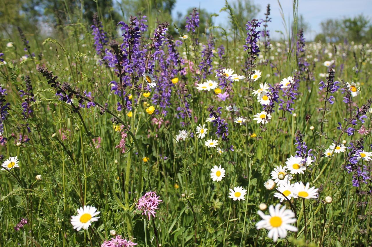вечер полевые цветы омской области фото и названия фасады окрашиваются любой