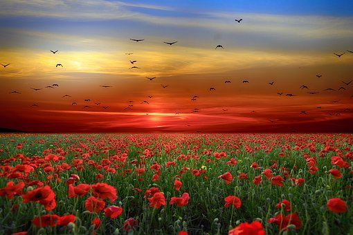Landscape, Flowers, Poppies, Sky, Clouds