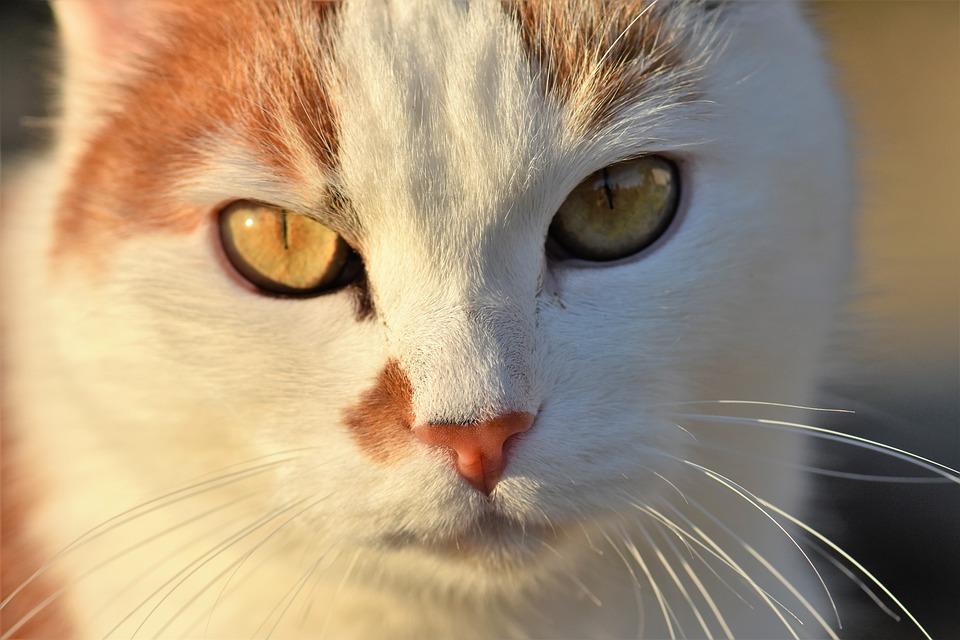 Zadarmo fotky z mačička