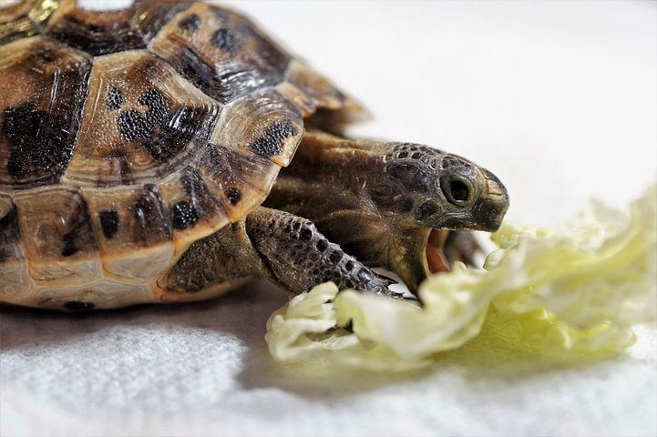 зависит фото черепахи близко работы выходят рамки