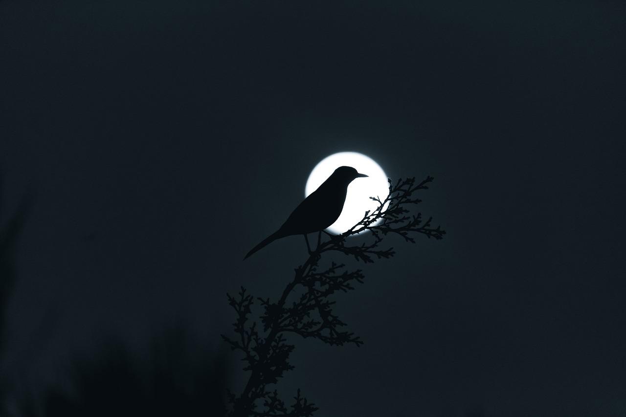 картинки птицы ночью своём арсенале