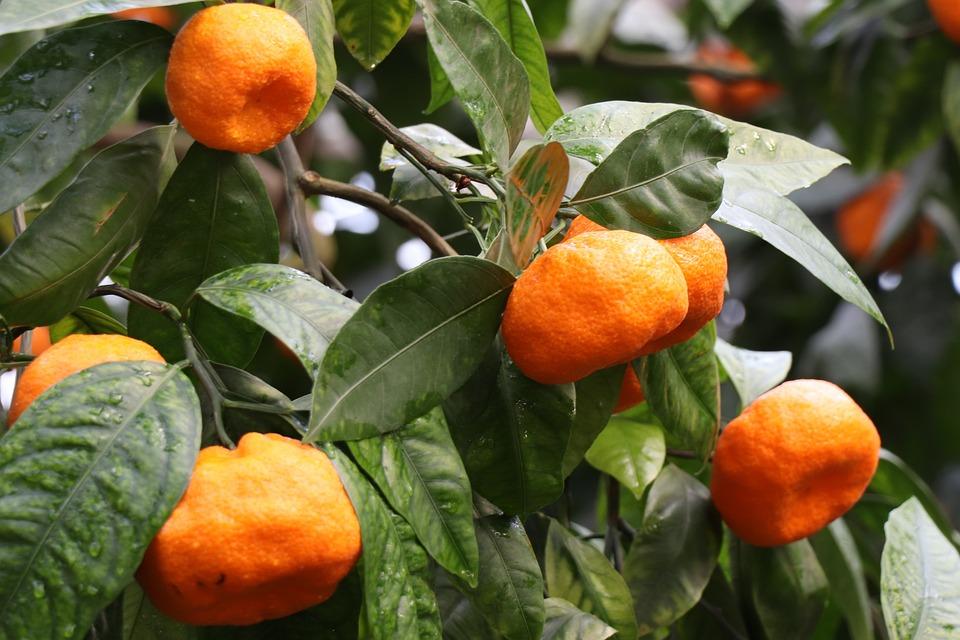 Mandarini, Mandarino, Agrume, Nutrizione, Cibo, Frutta