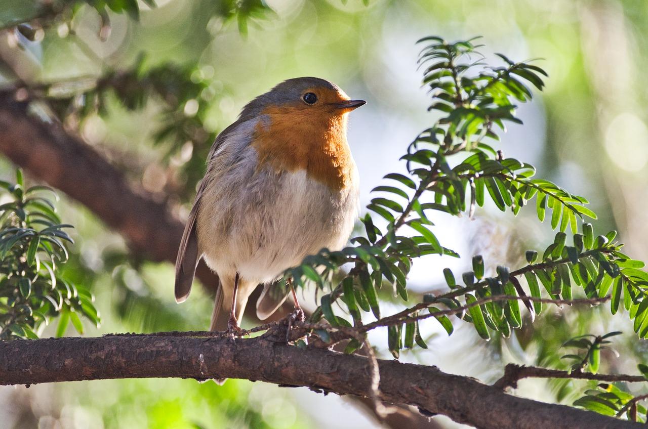 лесные певчие птицы фото с названиями