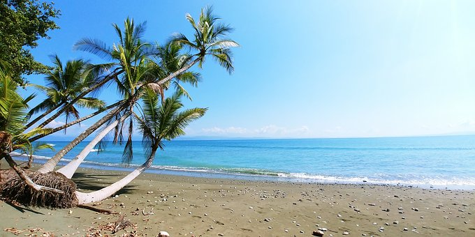 Costa Rica, Plant, Beach, Palm, Romantic