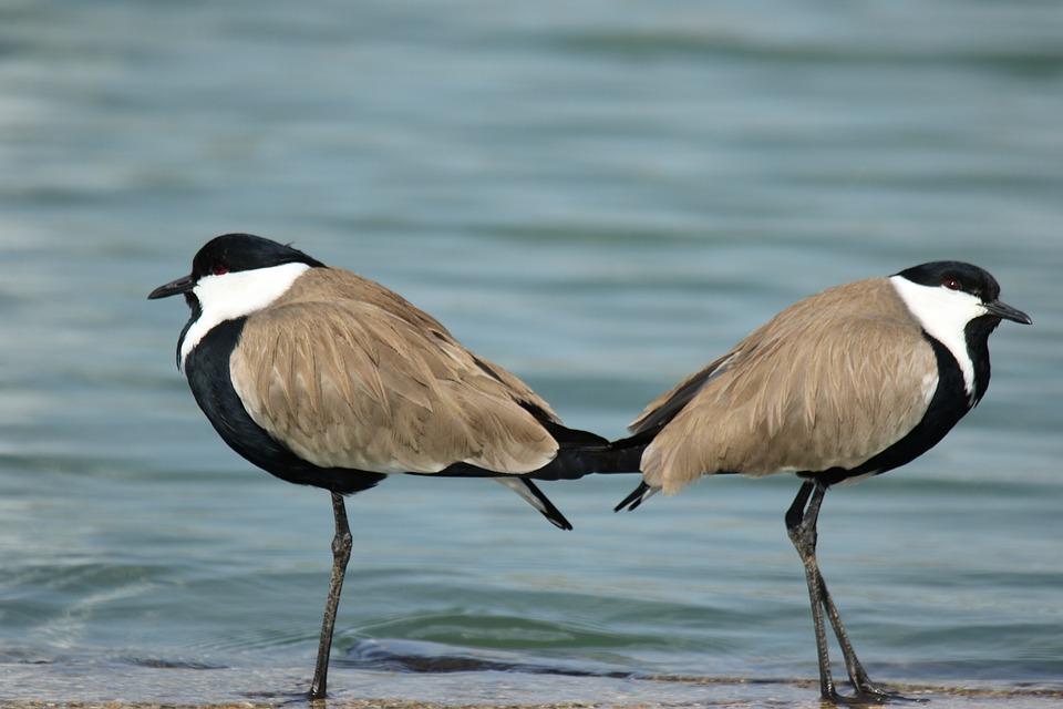 Μια εικόνα ενός τύπους πουλί