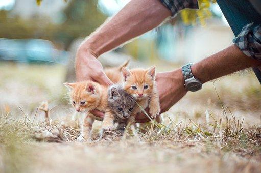 Kittens, Small, Hands, Hold, Grass