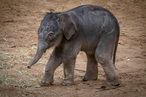 3,000+ HD Elephant Pictures & Images - Pixabay - Pixabay