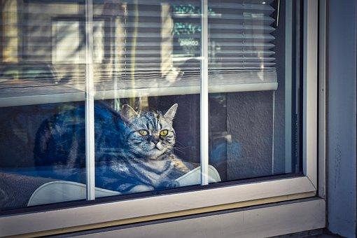 Cat, Des Animaux, Animaux, Portrait