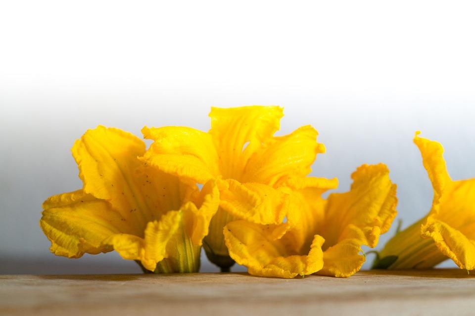54+ Gambar Bunga Labu Paling Keren