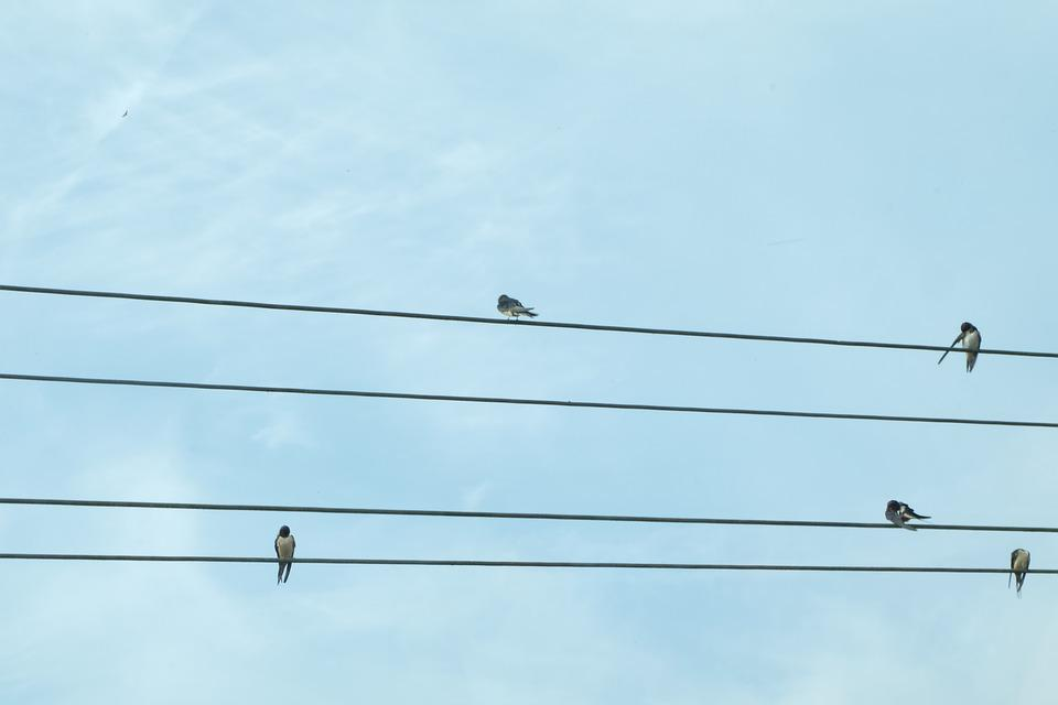 Birds, Communication, Twitter, Dialogue